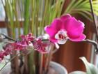 Przeplatające się gałązki i kolory storczyków Phaleopsis i Oncidium.